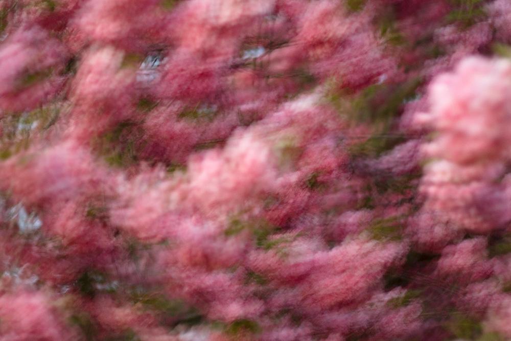 Blossom Motion