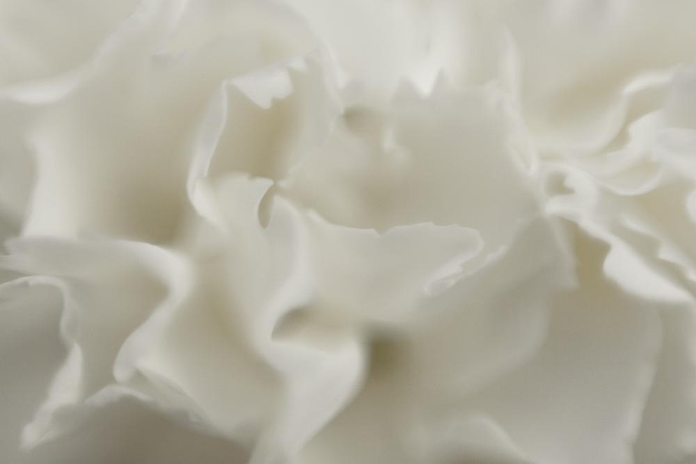 Macro White Petals (AZART 00015)